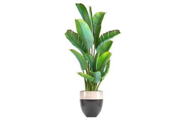 S_Pflanze
